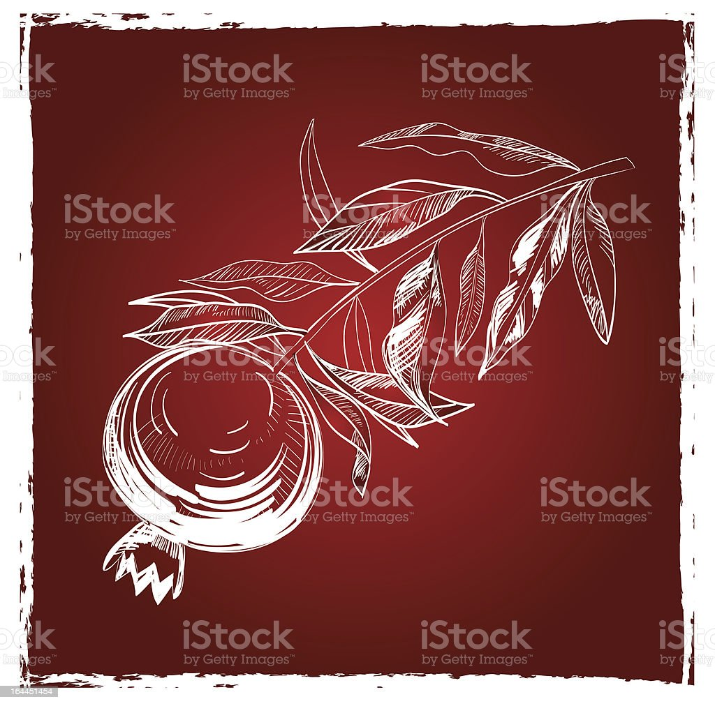 Drawing of  Pomegranate On Red Background vector art illustration