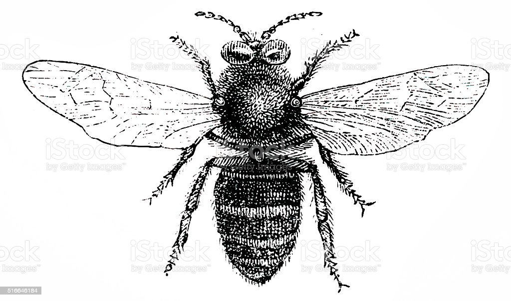 Drone bee vector art illustration