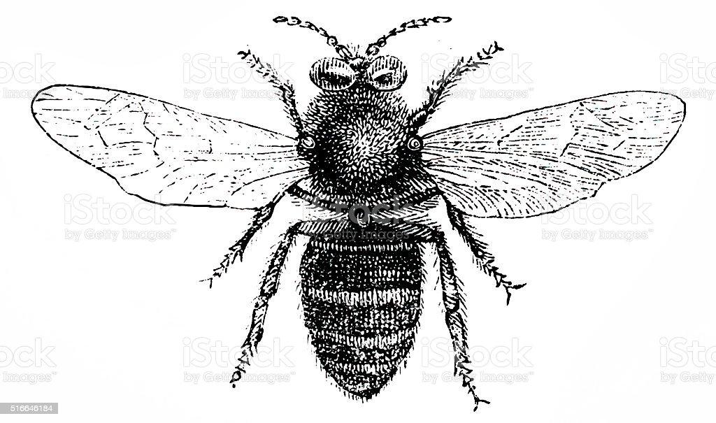 Drone bee vector art illustration