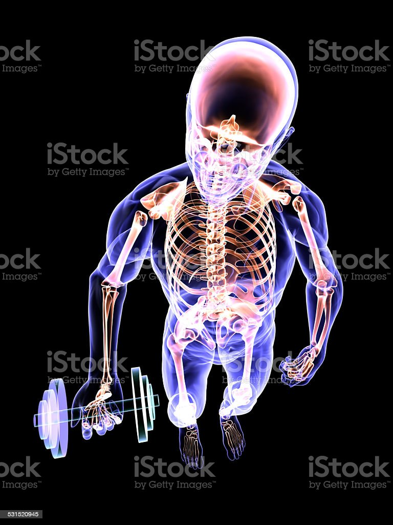 Dumbbell Curl's Anatomy vector art illustration