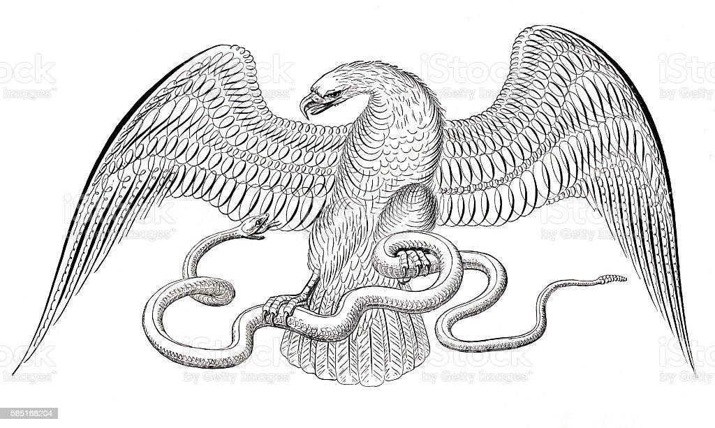 Eagle and snake penmanship calligraphy 1881 vector art illustration
