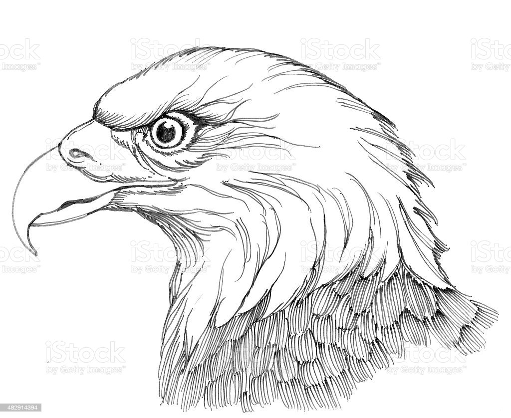 Eagle Lizenzfreies vektor illustration