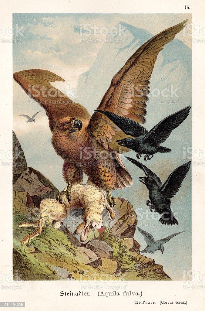 Eagle with hare illustration 1888 vector art illustration
