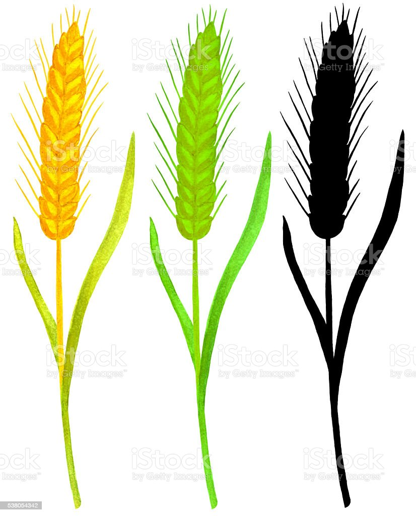 Ears wheat set vector art illustration