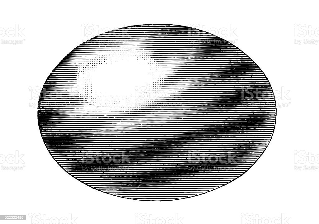 egg ,ellipsoid vector art illustration