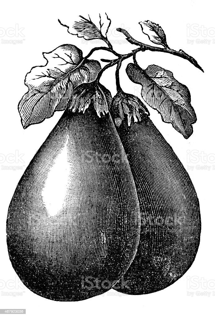 eggplant vector art illustration