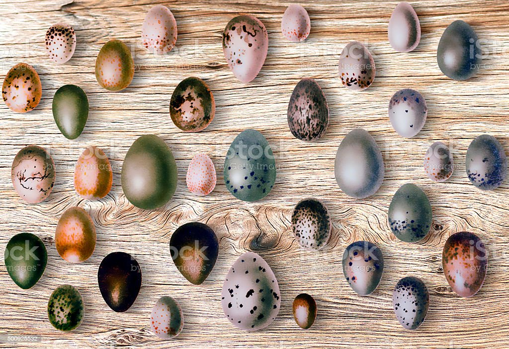Eggs of birds in front of wood background vector art illustration