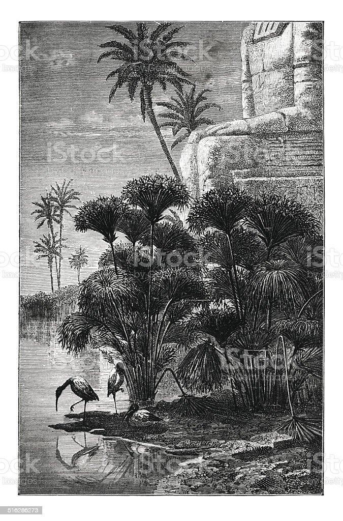 Egyptian papyrus (antique engraving) vector art illustration