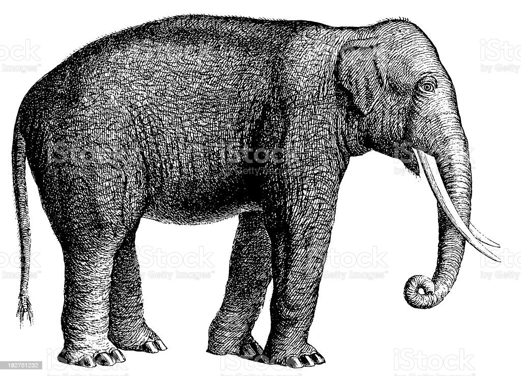 Elephant | Antique Animal Illustrations vector art illustration