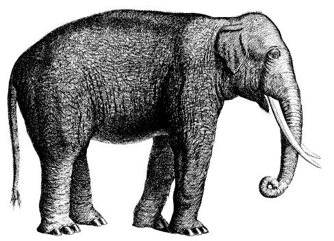 Elephant Clip Art, Vector Images & Illustrations - iStock Vintage Elephant Illustration