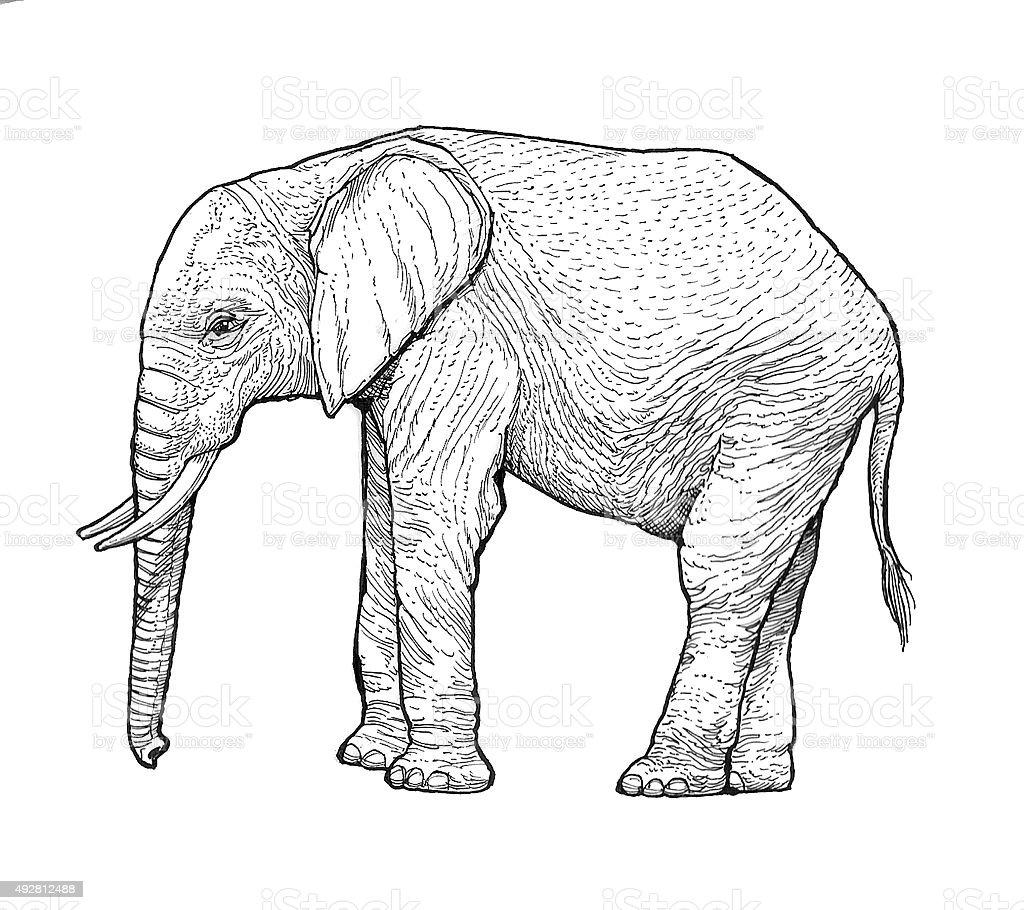 Elephant Lizenzfreies vektor illustration