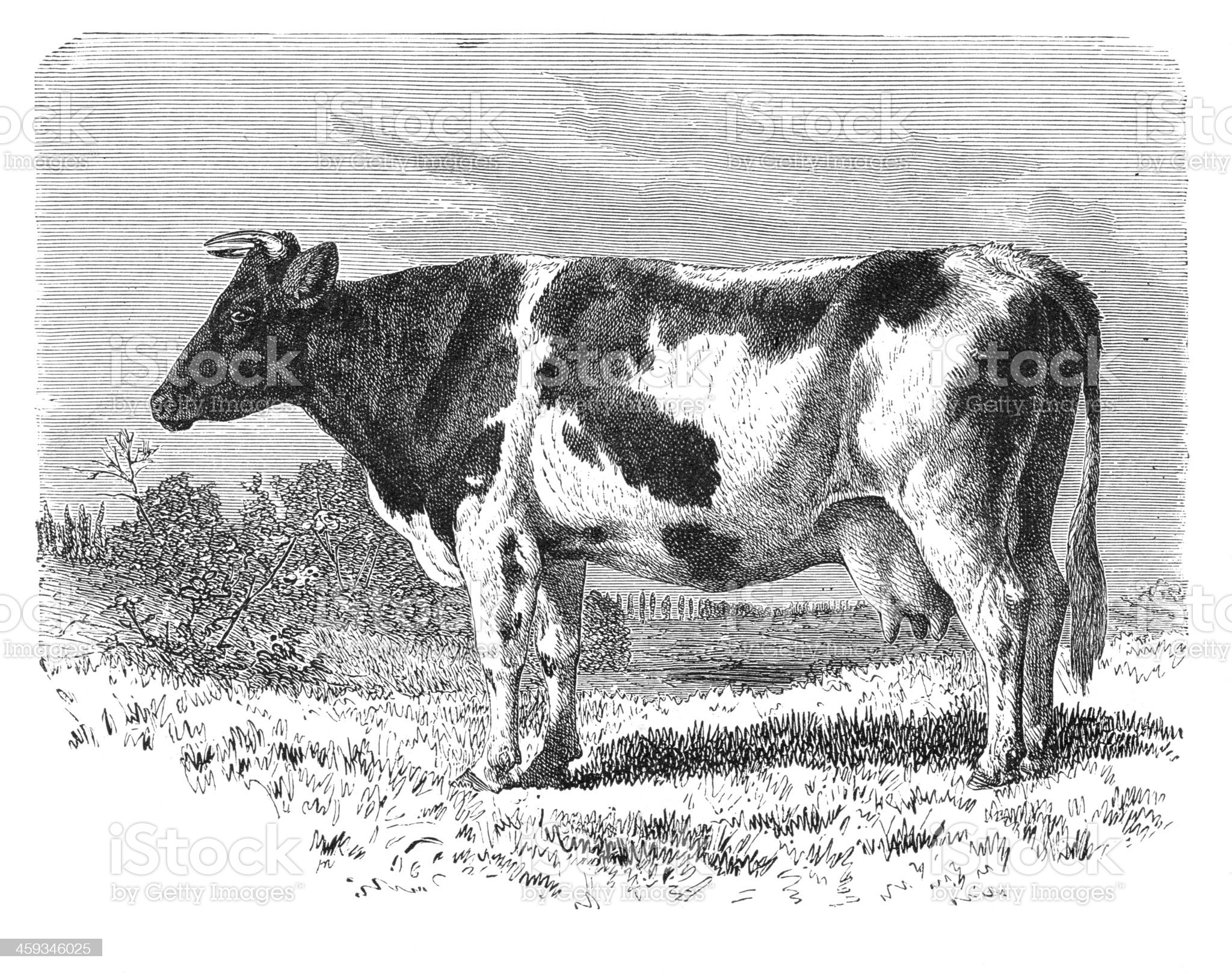 Engraving cattle 1877 royalty-free stock vector art