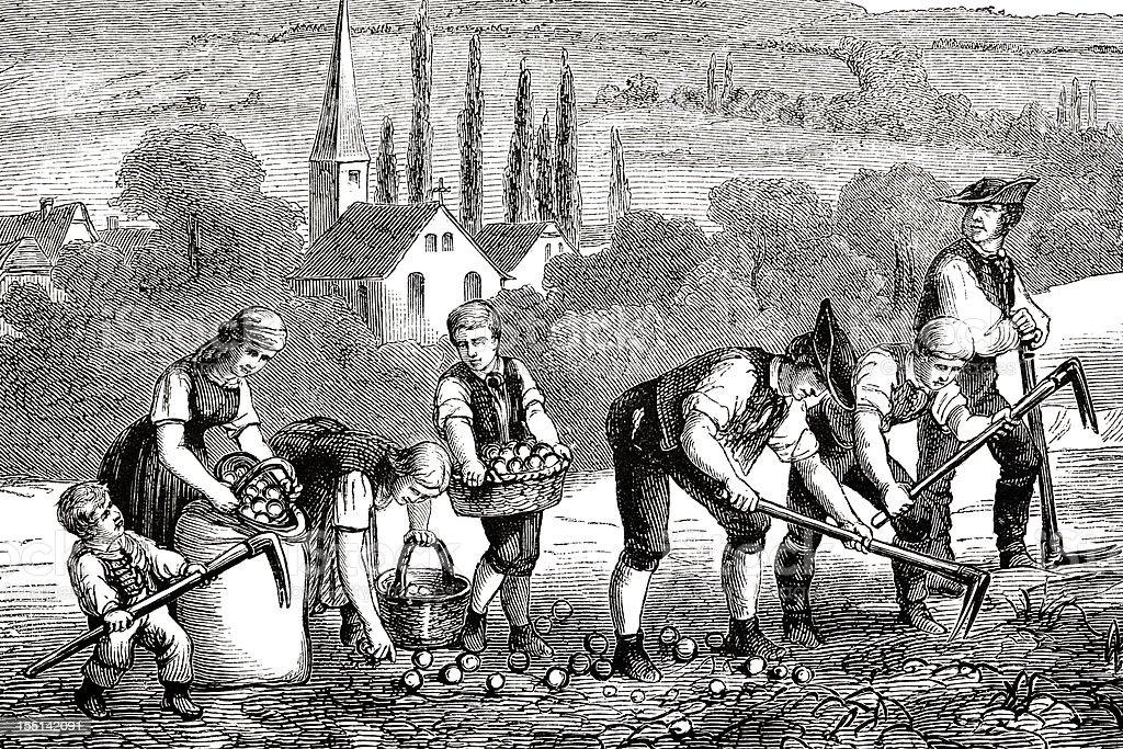 Engraving farmers harvesting potato field 1835 vector art illustration