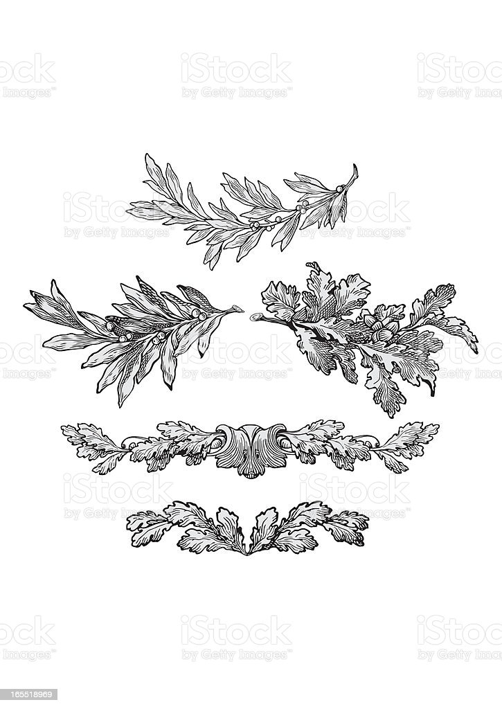 engraving leaves royalty-free stock vector art