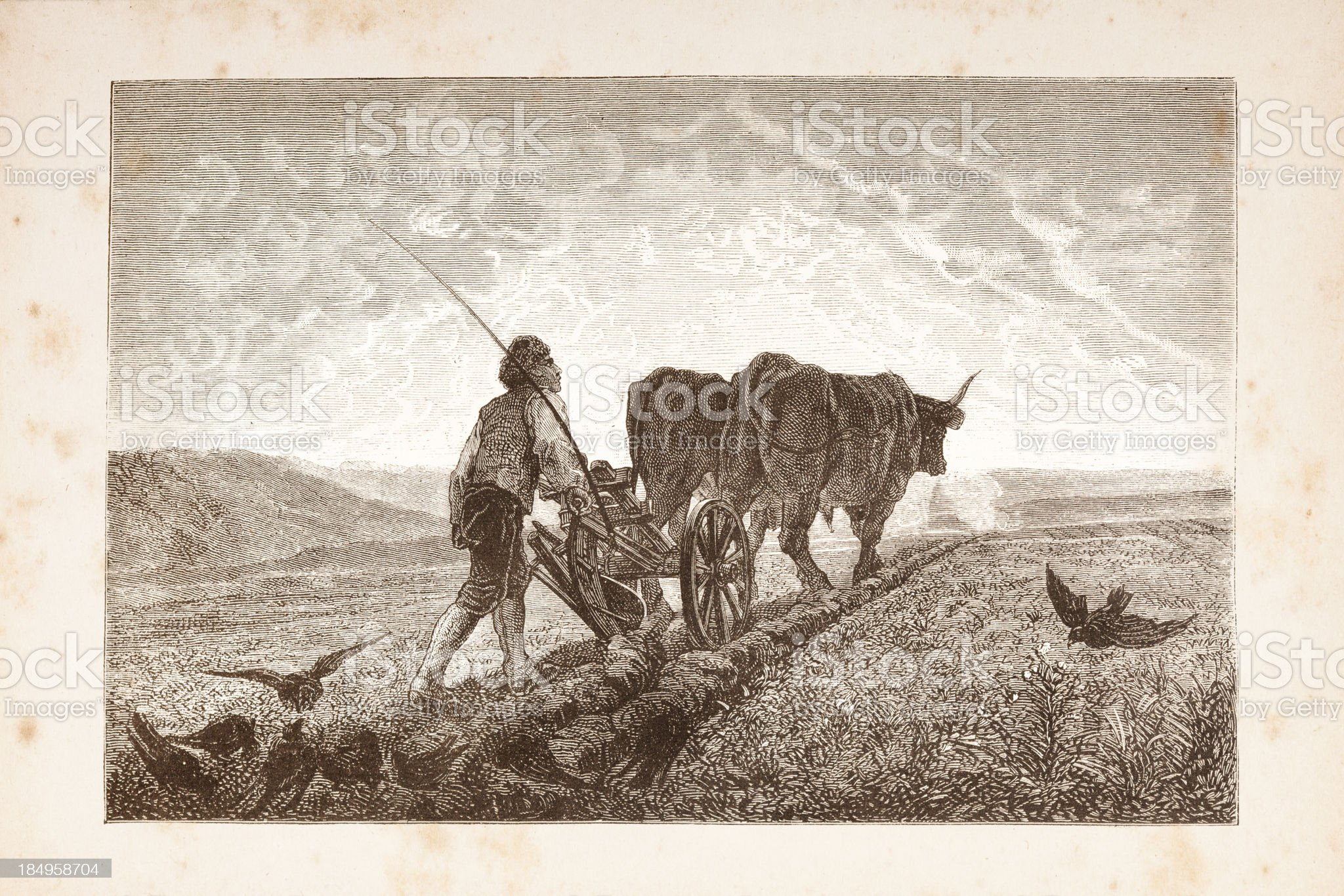 Engraving men plowing a field with two cows royalty-free stock vector art