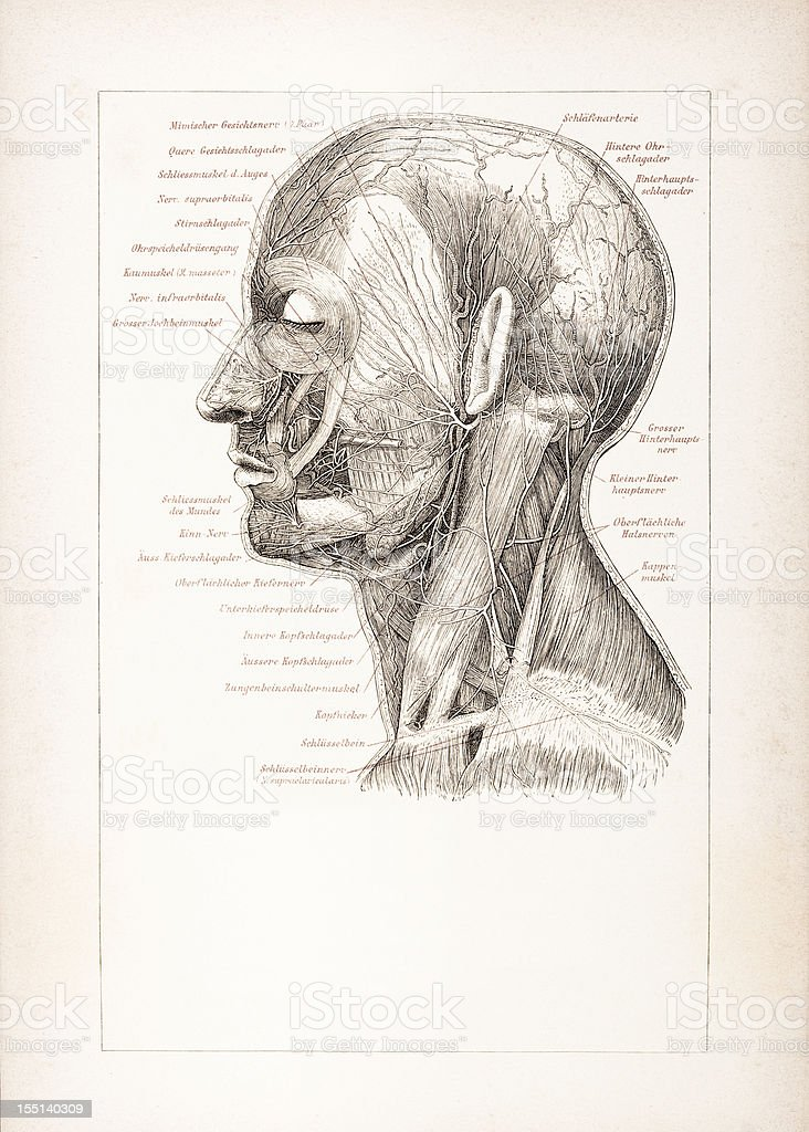 Engraving of human head with nervous system from 1878 royalty-free stock vector art