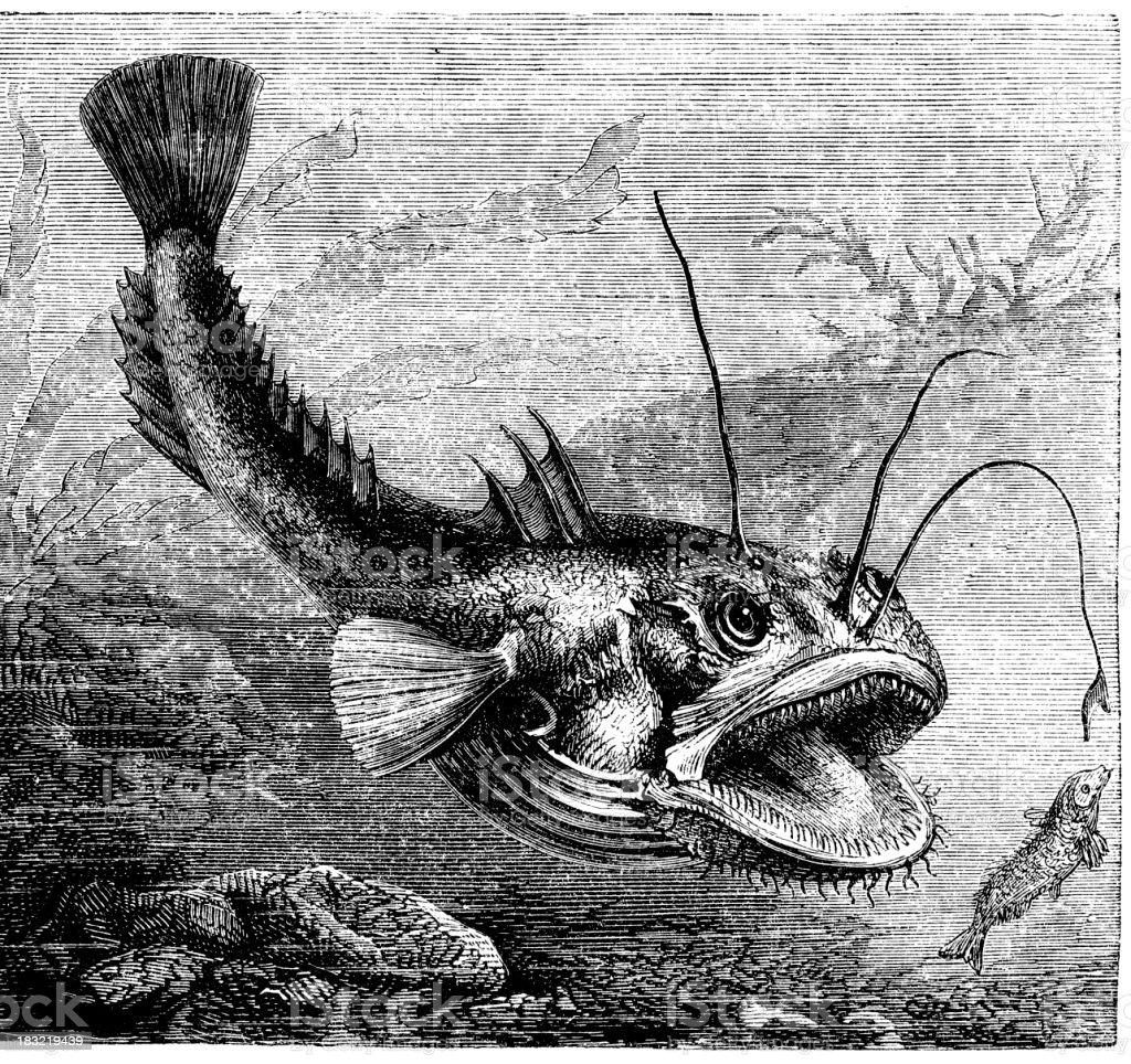 Engraving of sea-devil Lophius piscatorius vector art illustration