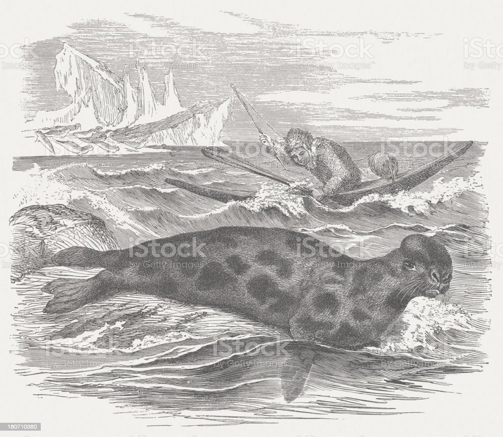 Eskimo hunting a hooded seal, wood engraving, published in 1875 vector art illustration