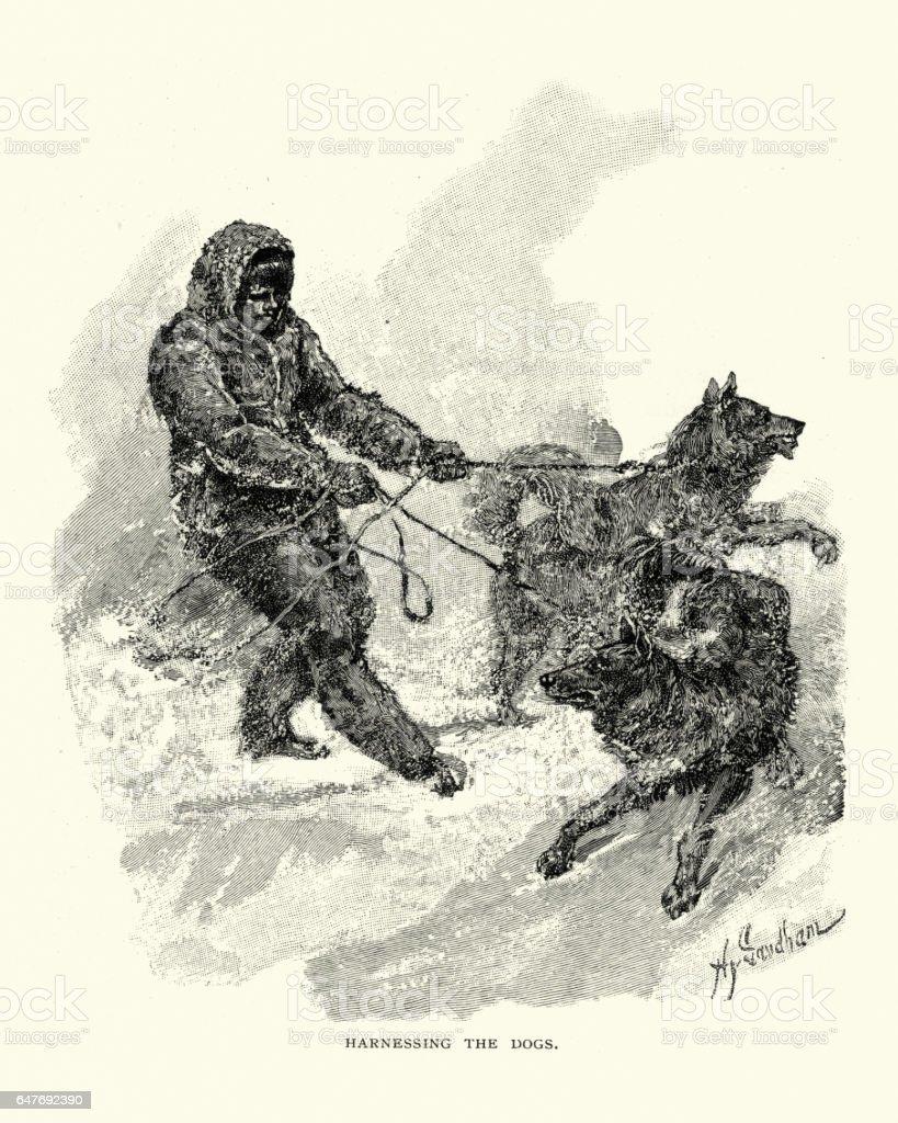 Eskimo man harnessing a team of dogs, 19th Century vector art illustration