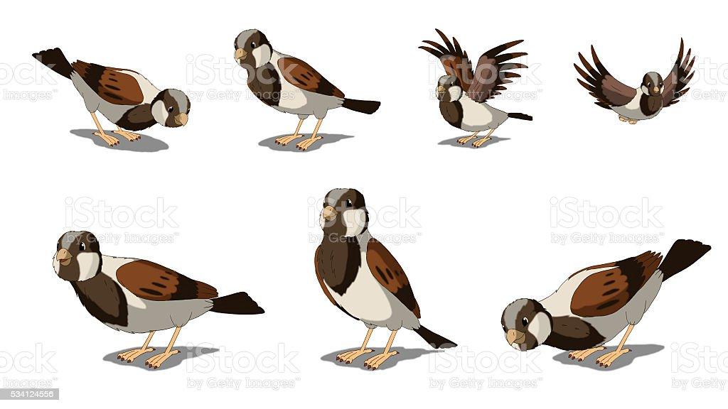 Eurasian Tree Sparrows Isolated on White Background vector art illustration
