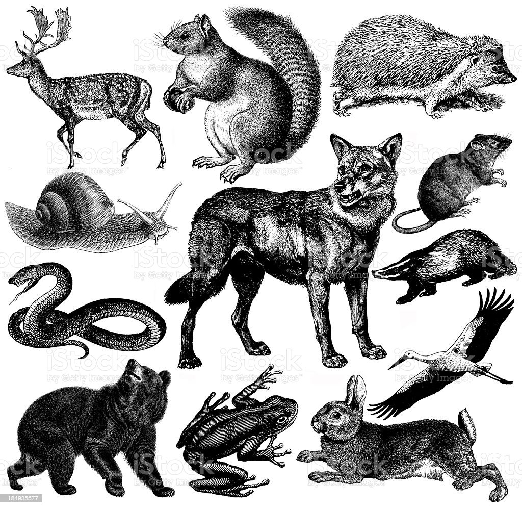 European Wildlife Fauna Illustrations | Vintage Animal Clipart royalty-free stock vector art