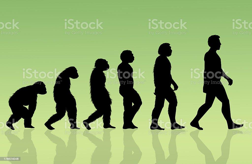 Evolution vector art illustration