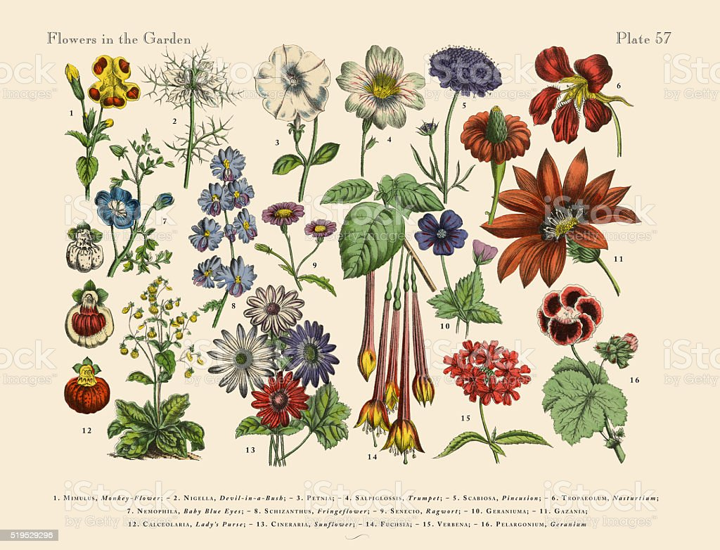 Exotic Flowers of the Garden, Victorian Botanical Illustration vector art illustration