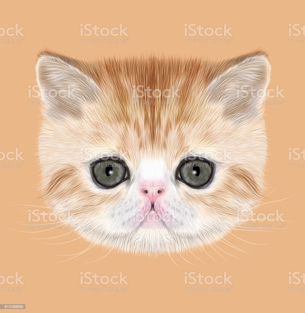 Exotic Shorthair Kitten vector art illustration