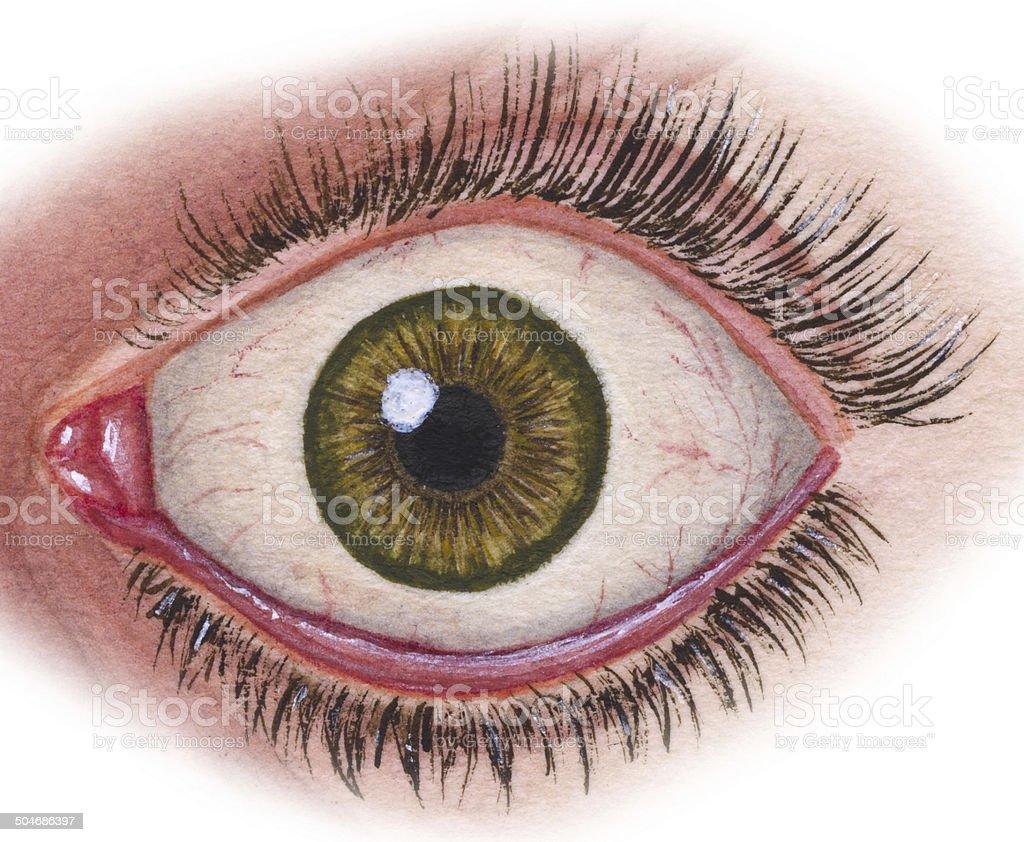 Eye In Situ vector art illustration