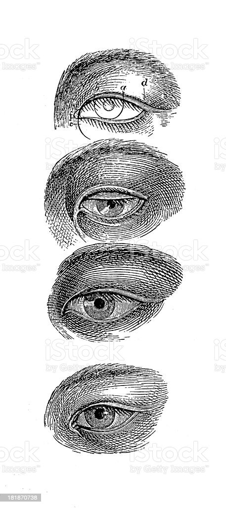 Eyes of Asian people vector art illustration