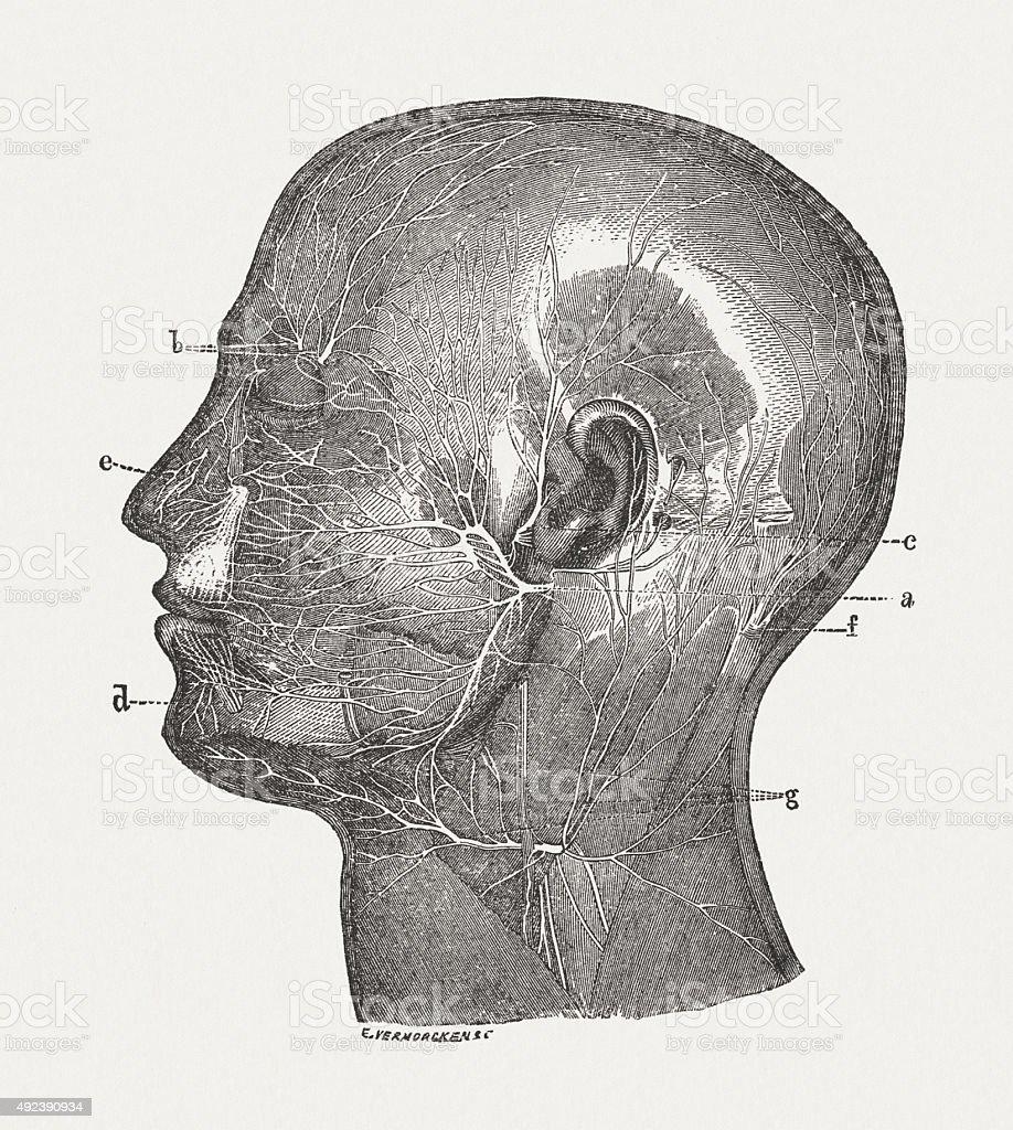 Facial nerves of man, published in 1884 vector art illustration