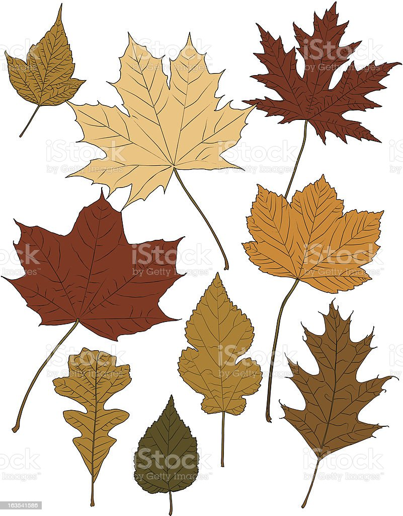 Fall Color Leaves royalty-free stock vector art