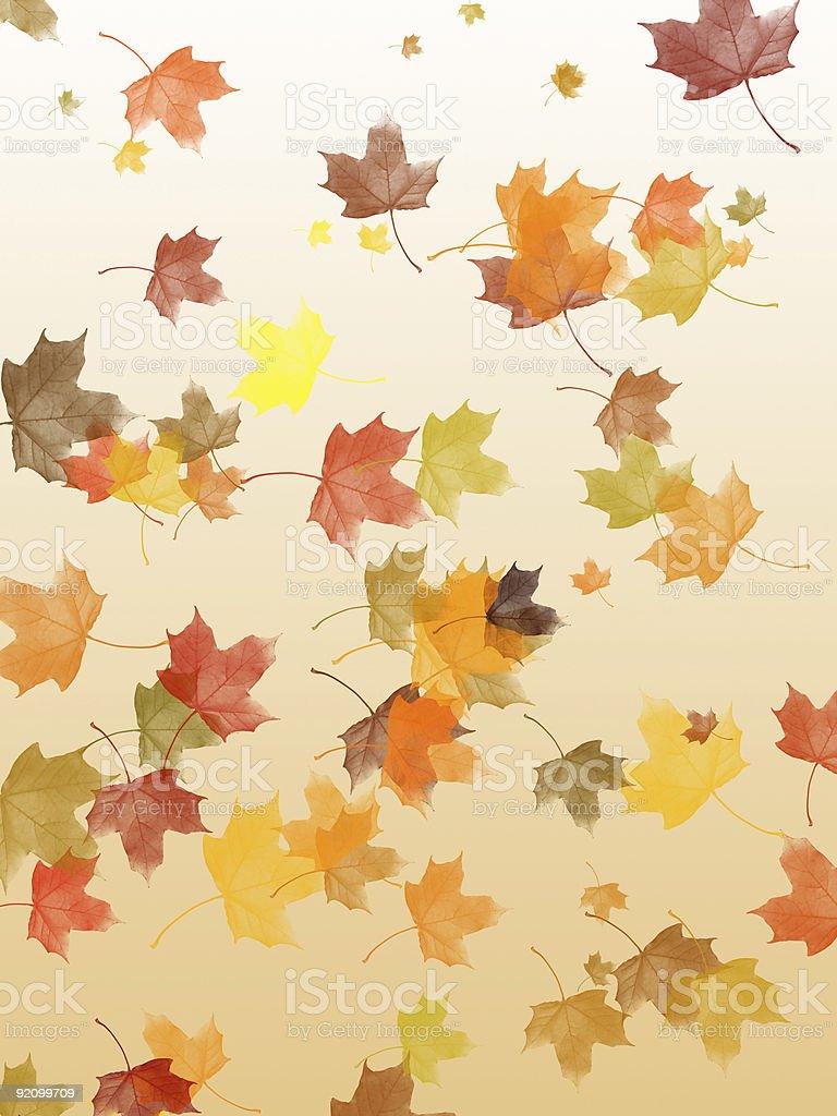 Falling maple leaves royalty-free stock vector art