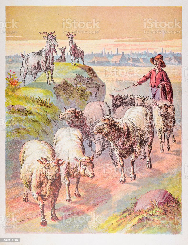 Farmer with his sheep and goats vector art illustration