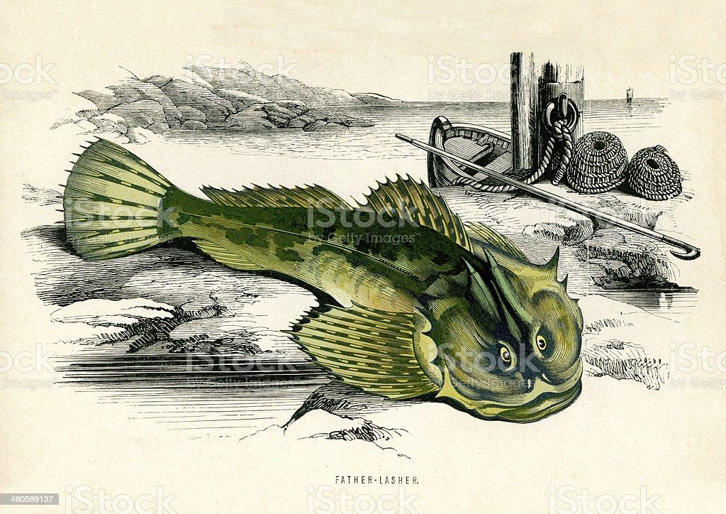 Father Lasher - Myoxocephalus scorpius vector art illustration