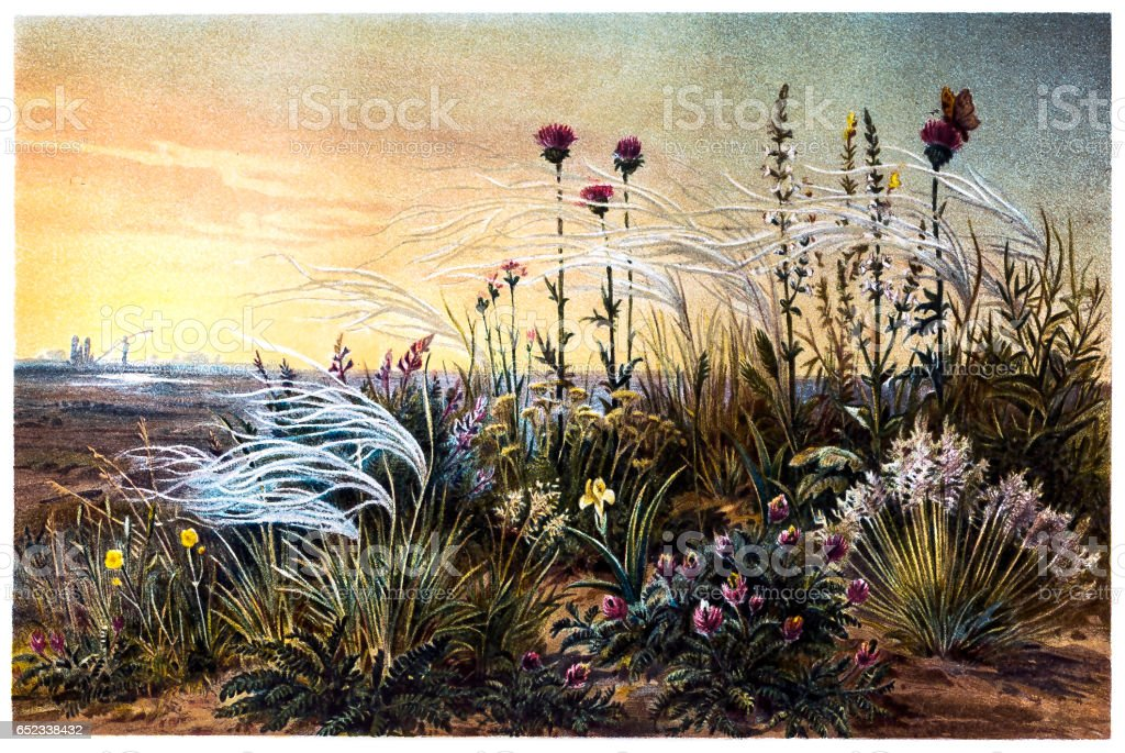 Feather Grass on a Russian Steppe vector art illustration