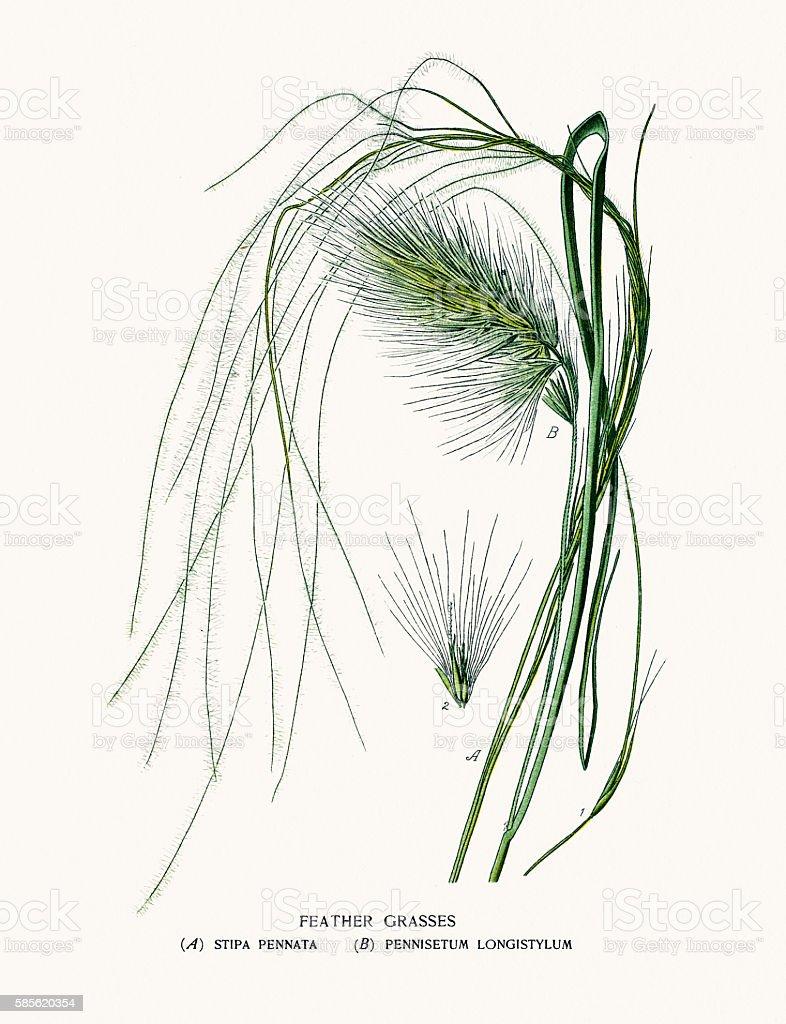 Feather grasses vector art illustration