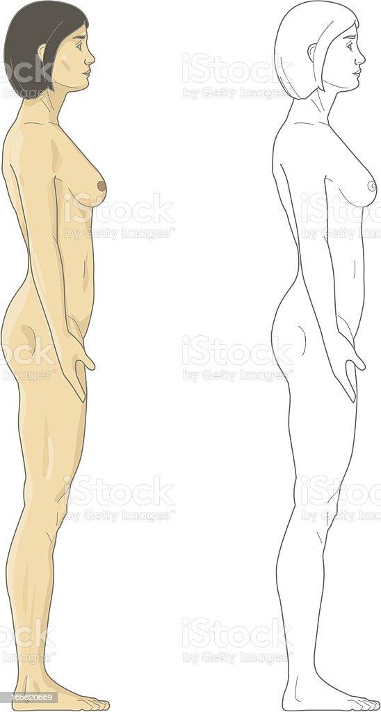 Female body royalty-free stock vector art