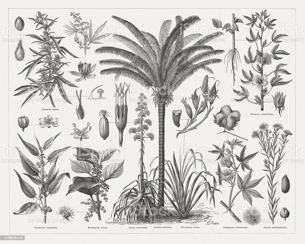 Fiber plants, wood engravings, published in 1878 vector art illustration