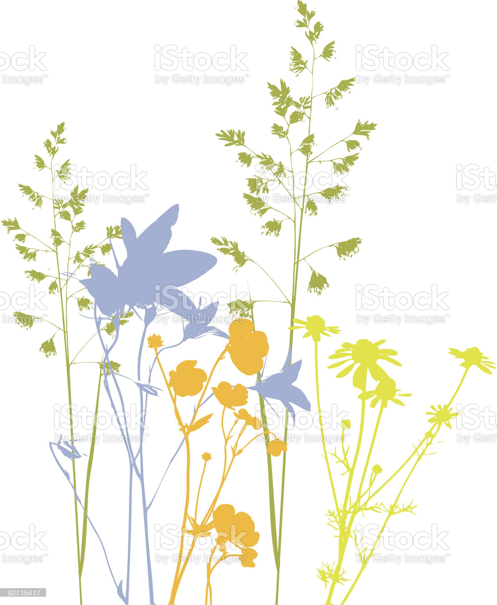 Field flowers, herbs and plants, vector, traced royalty-free stock vector art