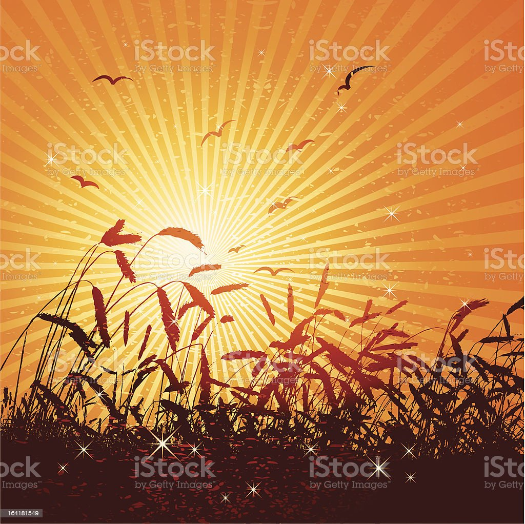 field of wheat , vector vector art illustration