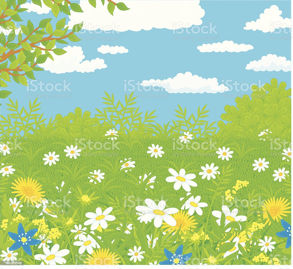 Field with flowers vector art illustration