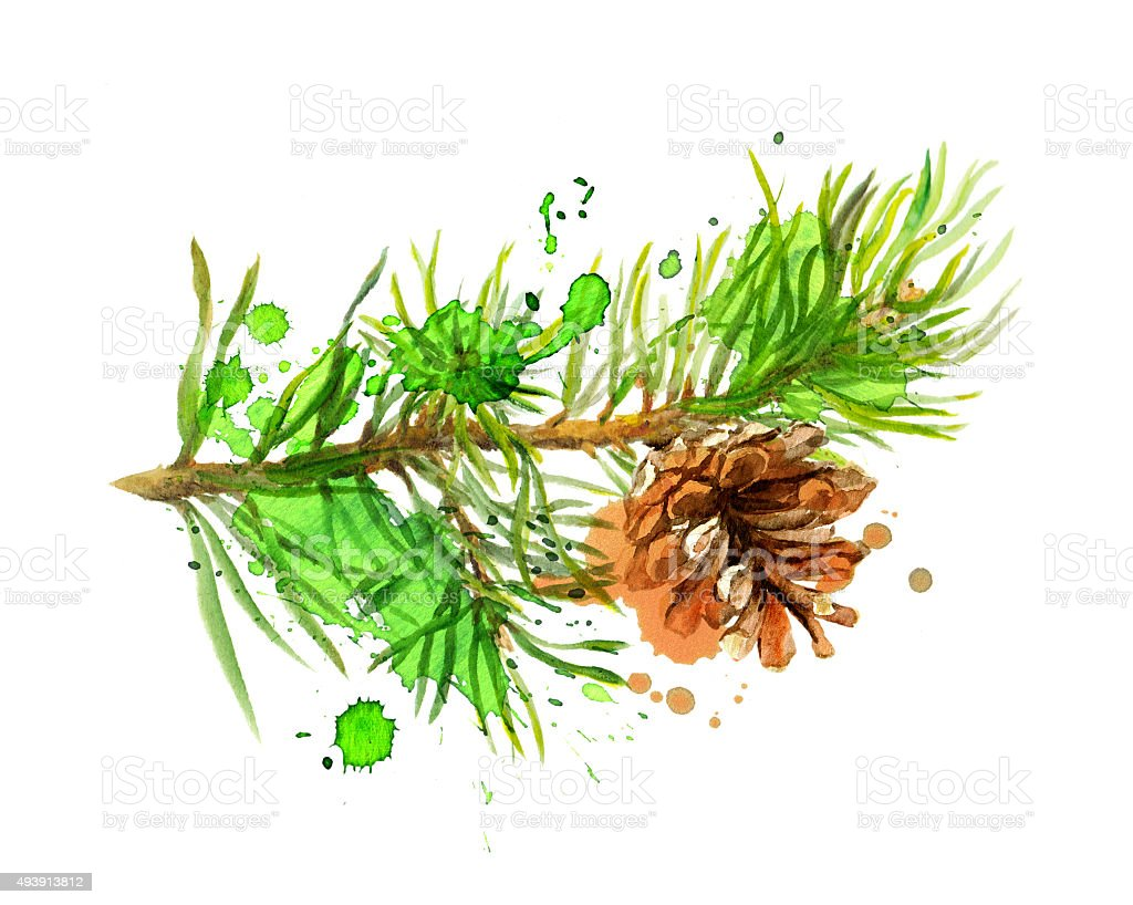 Fir tree branch and pine cone in art design. Watercolor vector art illustration