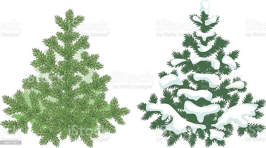 Fir tree detailed illustration royalty-free stock vector art