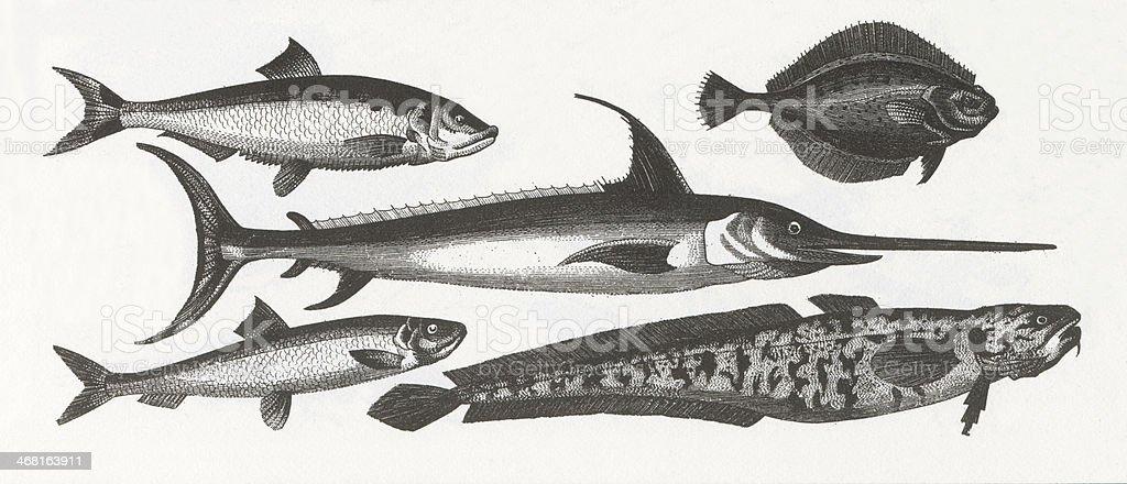Fish Engraving vector art illustration