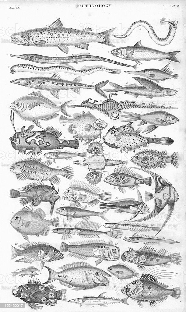 Fish old litho print from 1852 vector art illustration