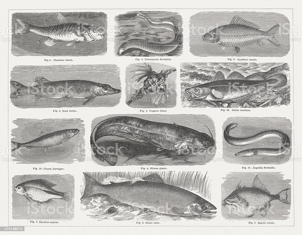 Fishes, published in 1875 vector art illustration