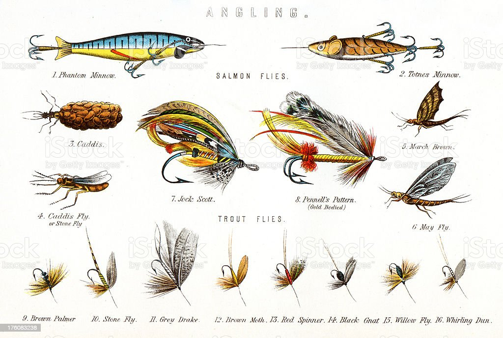 Fishing Flies - Angling vector art illustration