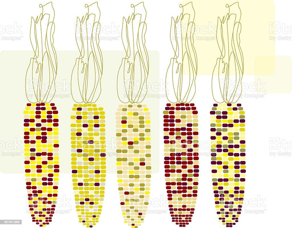 Five ears of corn royalty-free stock vector art