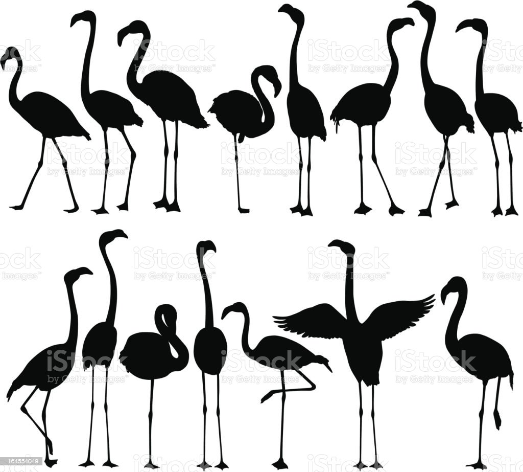 Flamingo Silhouettes vector art illustration